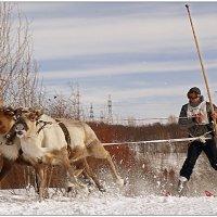 И только снег... :: Кай-8 (Ярослав) Забелин