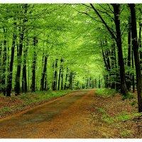 Апрельский лес :: Boris Alabugin