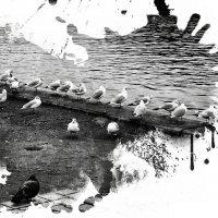 пастух :: Лара Leila