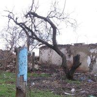 Деревья войны 21 века :: Владимир