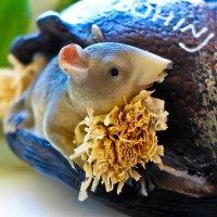 Кот из дома - мыши в пляс... :: Светлана Игнатьева