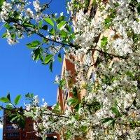 Весны прекрасное творенье :: Елена Семигина