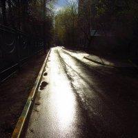 Дождь прошел :: Андрей Лукьянов