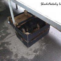 Собака в коробке :: Наталья (ShadeNataly) Мельник