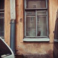 Кот в окне :: Олег Загорулько