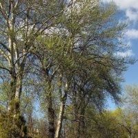 Весна в Летнем парке Пскова :: Татьяна Ким