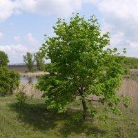 У реки весной... :: Сергей Махонин