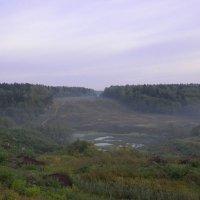 Утренний лес :: Владимир Левый