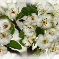 ...и снова весна... :: Lena