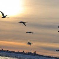 Променад по заливу. :: Александр Быбов