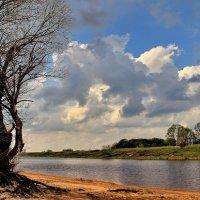 Береговой реликвией ветла... :: Лесо-Вед (Баранов)