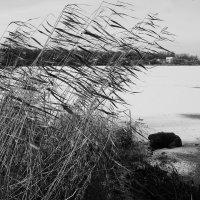 Ветер :: galina bronnikova