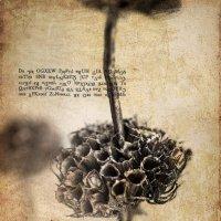 Ботаника :: Хась Сибирский