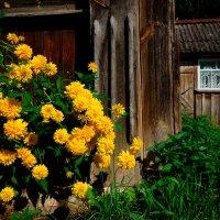 Золотые шары. :: Игорь