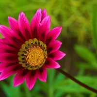 Цветы :: snd63 Сергей