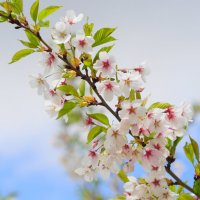 Весна :: ALena Gawrilenko