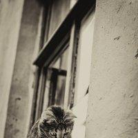 Outside... :: Елизавета Вавилова