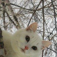 Белый Кот. :: Кристина Девяткина