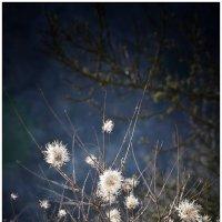 Загадочная флора крымских гор :: Сергей Харченко