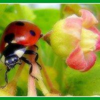 БК и цветок смородины :: Вячеслав Минаев