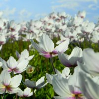 Пора цветения. :: nadyasilyuk Вознюк