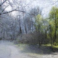 Из зимы в весну :: Sergey Lebedev