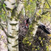Гнездо :: Алексей Сенин