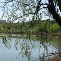 Весна у реки... :: Тамара (st.tamara)