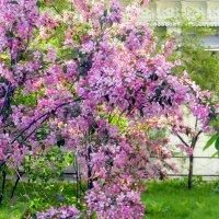 Весна в Москве. :: Елена