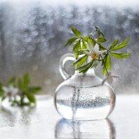 дождливое утро... :: Natali-C C