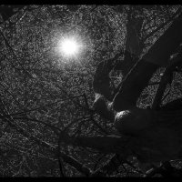 В паутине Ночи :: shvlad
