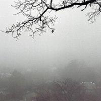 Сквозь густой туман :: Сергей Тарабара