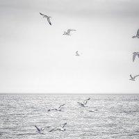 Чайки над озером. :: Gene Brumer