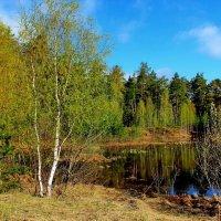 Ещё одна Мещёрская весна... :: Лесо-Вед (Баранов)