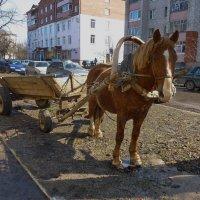 Одна лошадиная сила :: Валерий Талашов