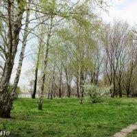 Весна в Ростове-на-Дону :: Нина Бутко