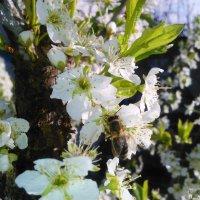 Весна :: Manas ZHienkaliev