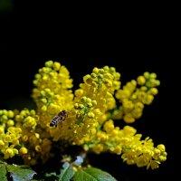 Таинство полета пчелы :: Александр Бойко