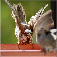 Я прав! :: linnud