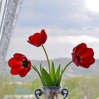 Красные тюльпаны. :: Анатолий