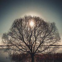 Весна :: Дмитрий Колесников