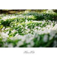 Весна :: Tatiana Treide