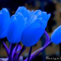 Синие тюльпаны :: Mariya laimite