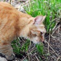кот травоядный :: Валерия Шамсутдинова