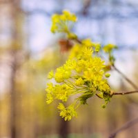 Пробуждение весны :: Фотохудожник Наталья Смирнова