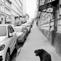 И мне бы машину вместо будки :: Николай Ярёменко