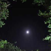 "Лунная дорожка :: Даша ""Шуня"" Берейчук"