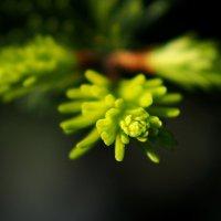 Зеленая Весна :: Swetlana V