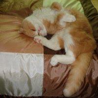 Это вы думаете, что у вас есть кот, а он совершенно уверен, что это вы есть у него!))))) :: Galina Dzubina