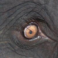 Всевидящее око :: Евгений Печенин